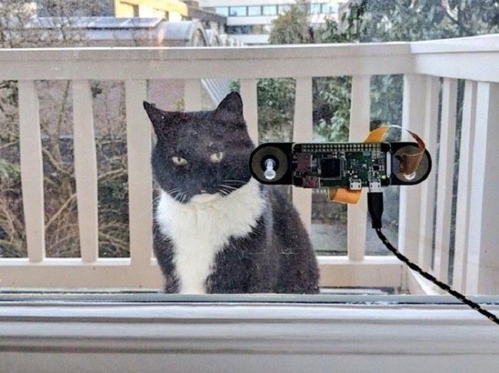 Голландский инженер сделал систему распознавания морды своего кота, чтобы пускать его домой